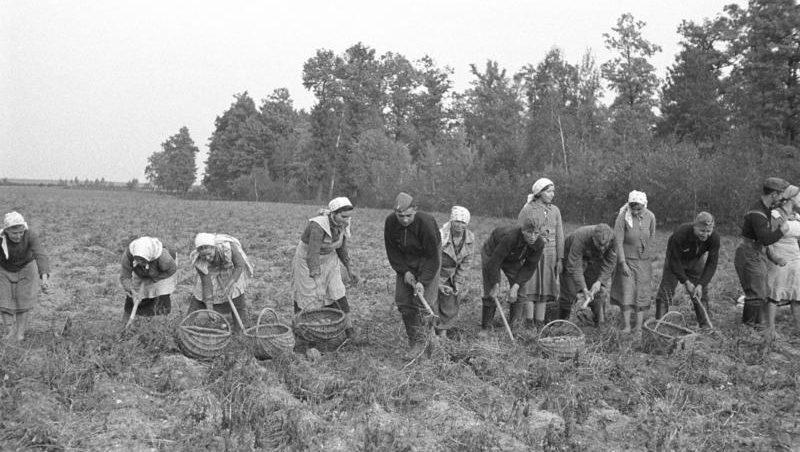 Polen, Bäuerinnen und Bauern bei Feldarbeit