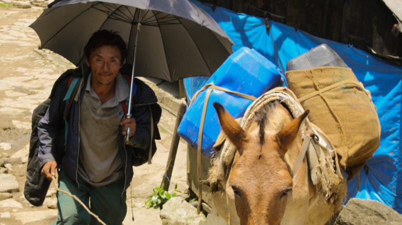 Donkey driver carrying up goods