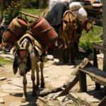 Donkeys carrying gas