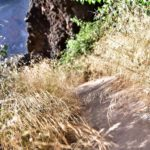 Teneriffa 2016 - Flora & Fauna entlang der Wanderroute