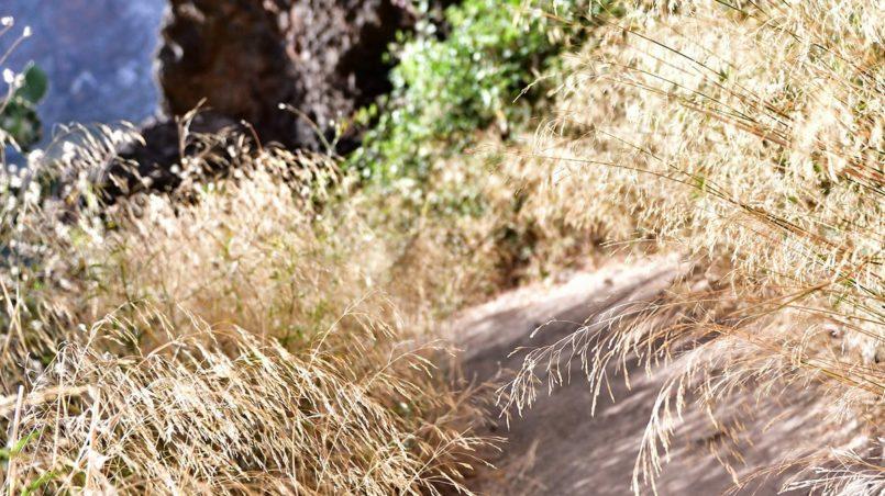 Teneriffa 2016 - Flora and fauna along the hiking path