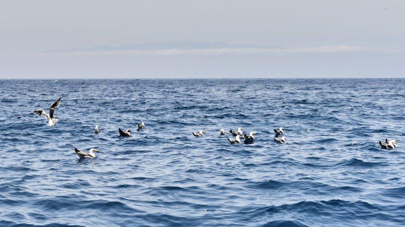 Teneriffa 2016 - Tierisches Treiben am Meer