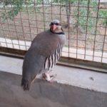 Momo, our house-bird