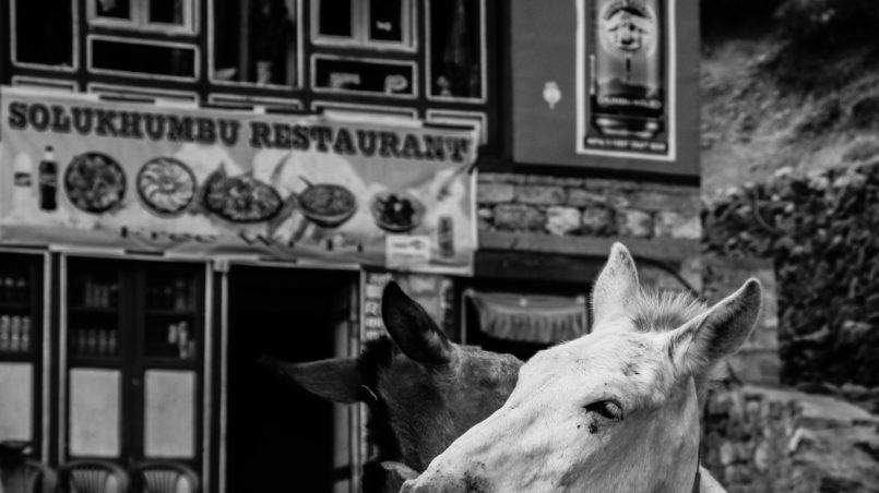 Animal love Namche Bazaar