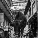 Just passing through Namche Bazaar