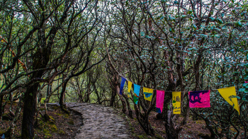 Leaving Tengboche alley of trees