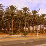 Straßen in Jericho
