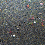 Microplastics Azores