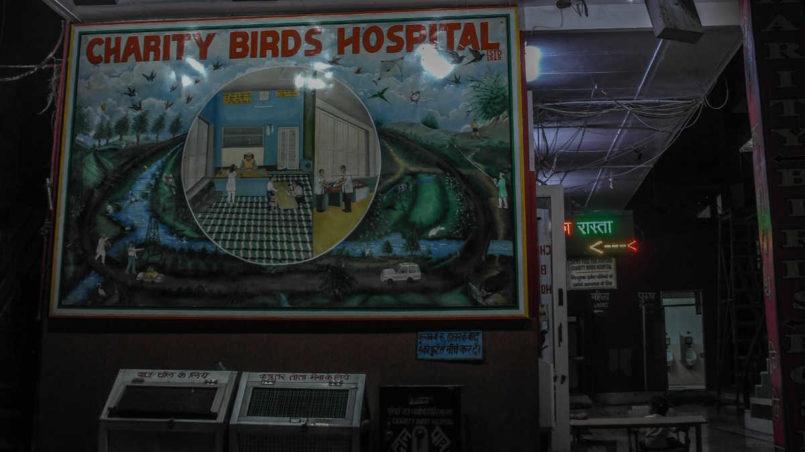 Charity Birds Hospital