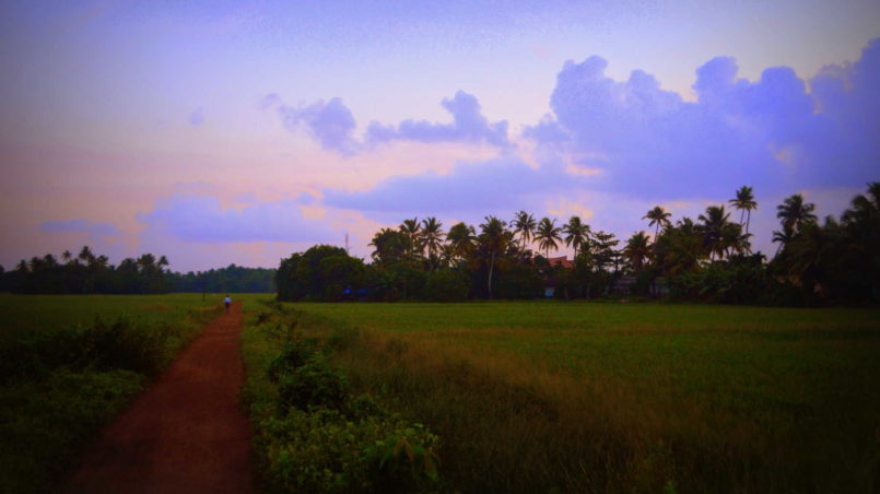a walk along the paddy fields