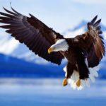 Cover-amazing-eagle