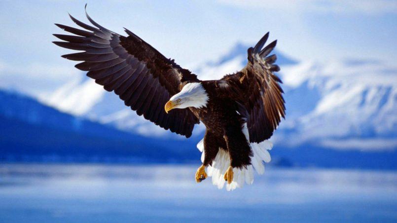 Titlebild-Fantastischer Adler