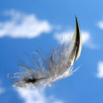 Bird's_Feather_in_Flight