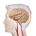 Cerebrovascular_System